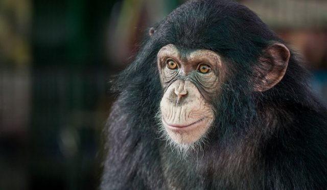 La mayoría animal inteligente 12 del mundo